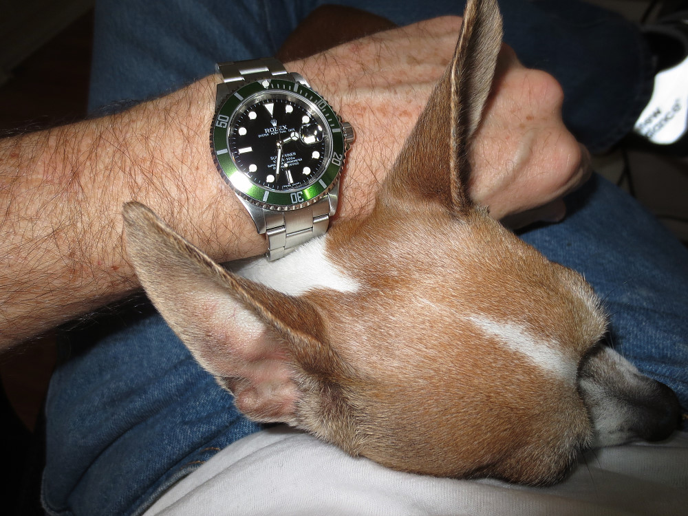 Iggy and one of my Rolex watches